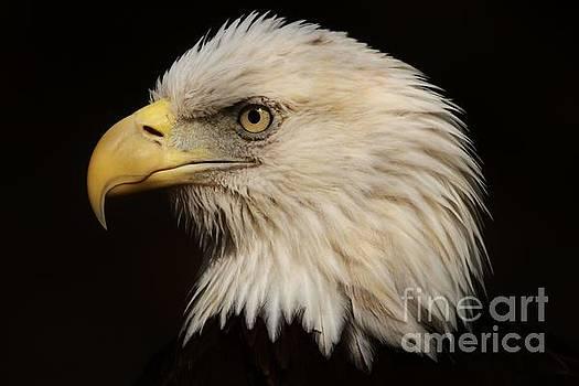 Paulette Thomas - Proud Eagle