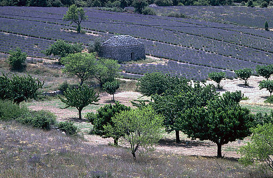 Flavia Westerwelle - Provence