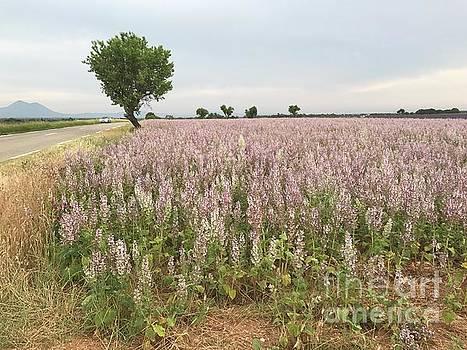 Provence Lavendar Dreams by Nadine Rippelmeyer