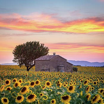 Francesco Riccardo Iacomino - Provence, sunflowers