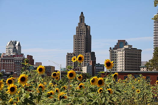 Providence Sunflowers by Jonathan Huggon