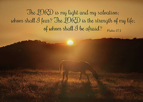 Psalms The Lord is my Light Horse in the Sunrise Bible Spiritual Verse by Stephanie Laird