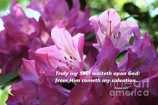 Psalms Verse - Rhododendron Blossoms  by Dee Winslow
