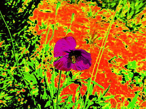 Psychedelic Poppy 3 by Ingrid Dance