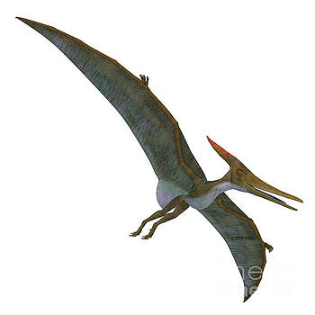 Corey Ford - Pteranodon Reptile Soaring