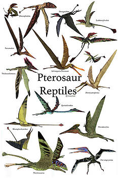 Pterosaur Reptiles by Corey Ford