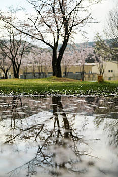Puddle With Tree by Hyuntae Kim