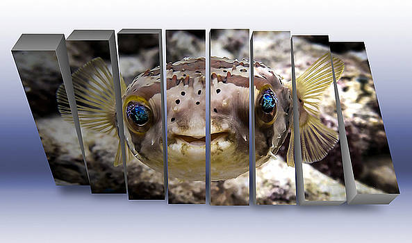 Pufferfish  by Marvin Blaine