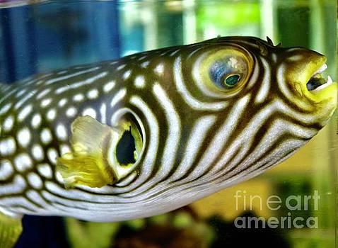 Pufferfish Smile by Craig Wood