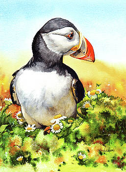Puffin by Peter Williams