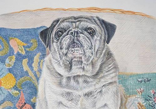 Pug  by Gail Dolphin