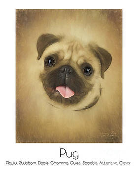 Pug Poster by Tim Wemple