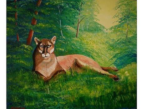 Puma by Jean Pierre Bergoeing