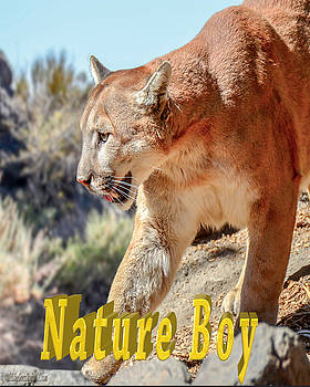 LeeAnn McLaneGoetz McLaneGoetzStudioLLCcom - Puma Mountain Lion Nature Boy