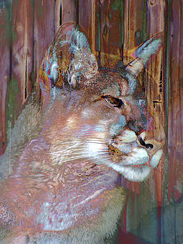 Puma by Robert Ball