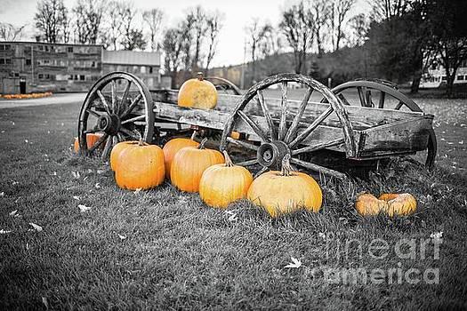 Pumpkin Harvest Stowe Vermont by Edward Fielding