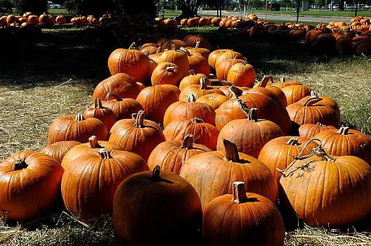 Teresa Blanton - Pumpkin Lines