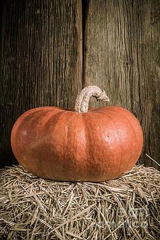 Edward Fielding - Pumpkin on straw bale