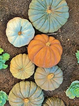 Pumpkin Patch by Donna Wilson