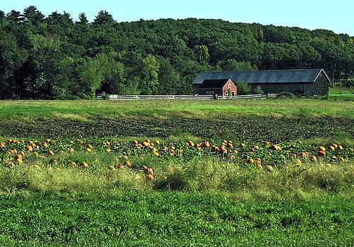 Pumpkin Patch by GJ Blackman