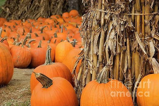 Pumpkin Patch by Jill Lang