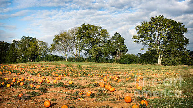 Pumpkin Patch by Todd Blanchard