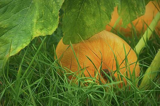 Nikolyn McDonald - Pumpkin - Ready for Harvest