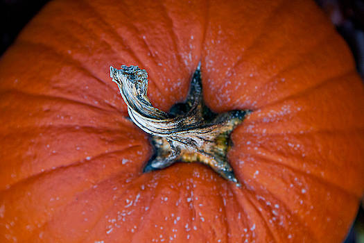 Pumpkin Stalk by Christopher Meade