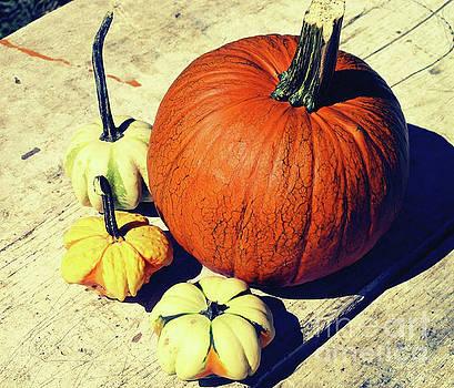 Onedayoneimage Photography - Pumpkin and Squash