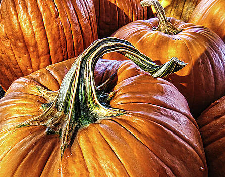 Pumpkins by Helaine Cummins