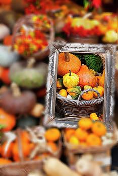 Pumpkins in a frame by Steve Bisgrove