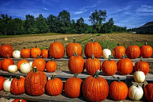 Dee Flouton - Pumpkins in a Row