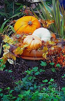 Pumpkins In the Garden by Kathleen Struckle