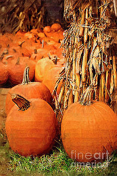 Pumpkins by Jill Lang