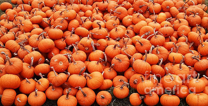 Pumpkins by Lynn Jackson