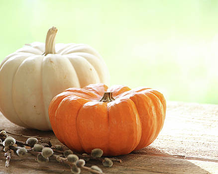 Pumpkins on a ledge by Terri Tiffany