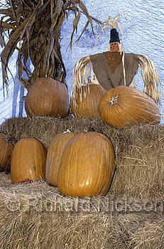 Pumpkins On Display by Richard Nickson