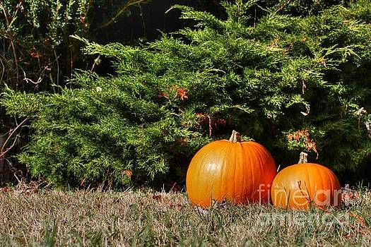 Pumpkins by Vicki Spindler