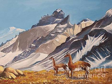Puna de Atacama by Jean Pierre Bergoeing