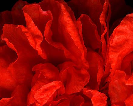 Marsha Tudor - Punica Red