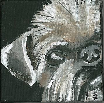 Pup Portrait 1 by Sarah Lowe