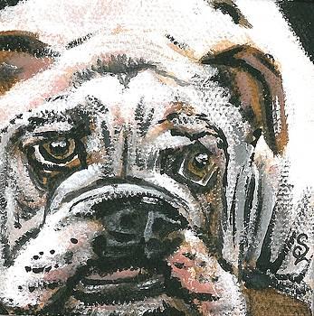 Pup Portrait 2 by Sarah Lowe