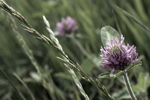 Off The Beaten Path Photography - Andrew Alexander - Puple Clover