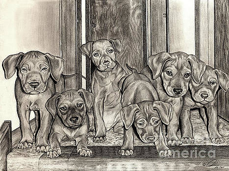 Puppies  by Omoro Rahim
