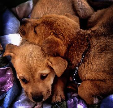 Puppies by Samuel M Purvis III