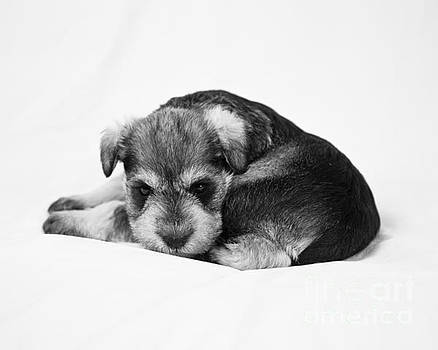Puppy 1 by Serene Maisey