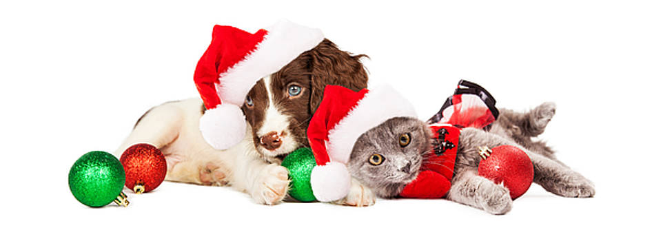 Susan Schmitz - Puppy and Kitten Laying With Christmas Ornaments