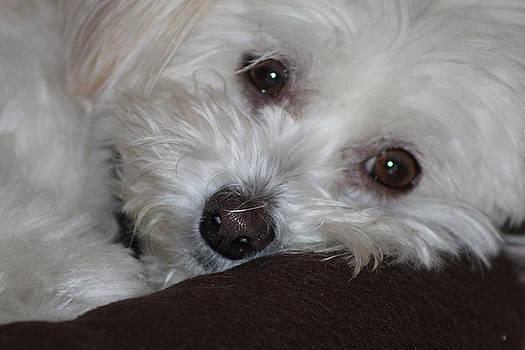 Puppy Eyes by LillyAnn Venturino