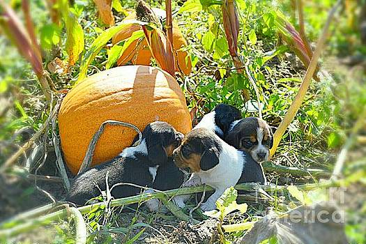 Puppy Harvest by Wendy Bechtold