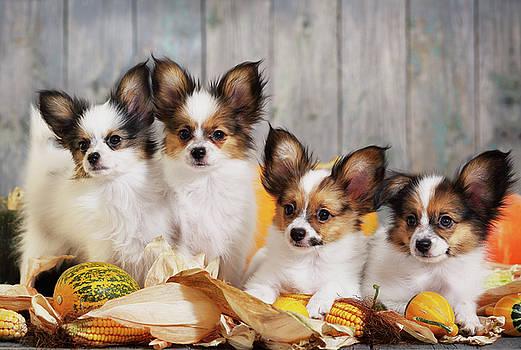 Puppy  by Iuliia Malivanchuk